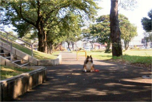 02 500 20150802 桜並木と除雪車 Erie