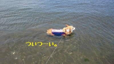 「泳ぐ」というより「浮かぶ」が正しい。