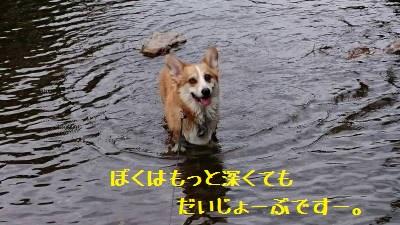 今日は浅いとこで遊ぼうね。