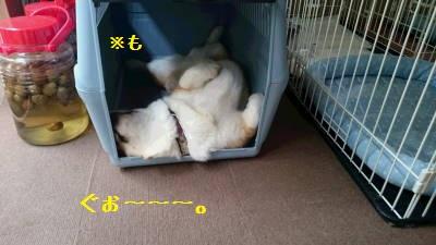 豪快な寝方。