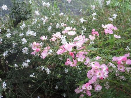 tnH27-07-28白蝶草とバレリーナ (2)