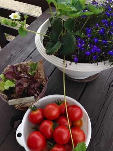 tomato150711-1