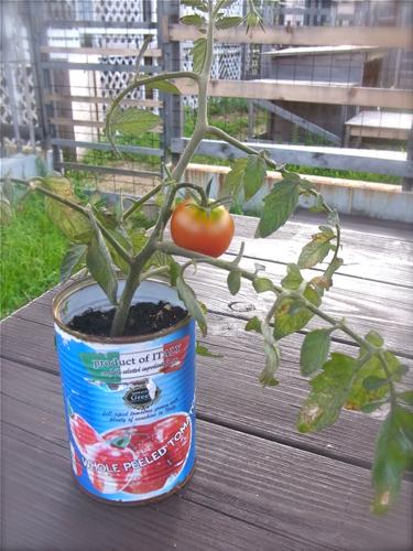 tomato150724-1