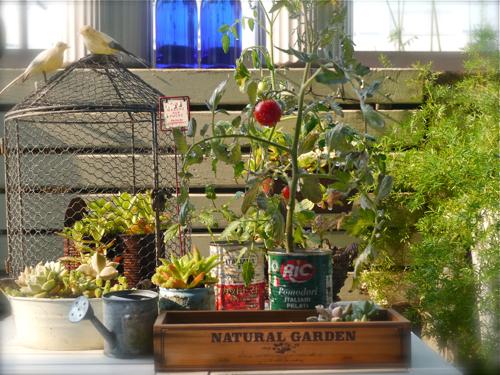 tomato150805-2