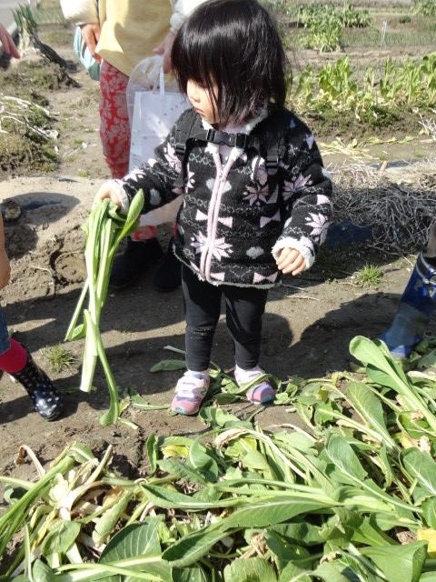 女池菜とり2015