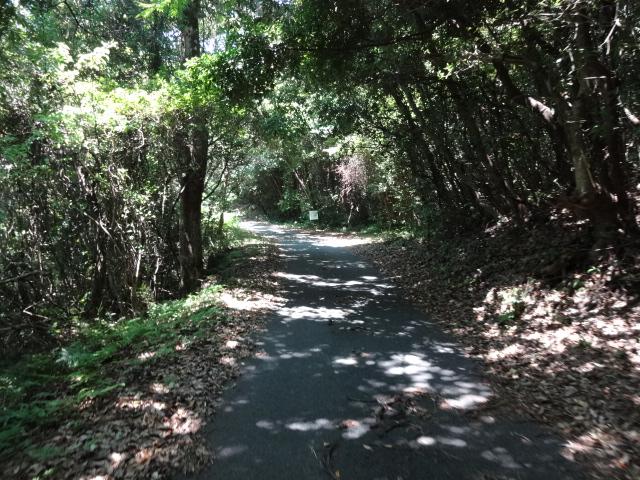 裾野の林道