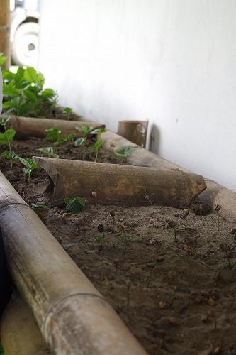 s-hacienda guayabal (7)