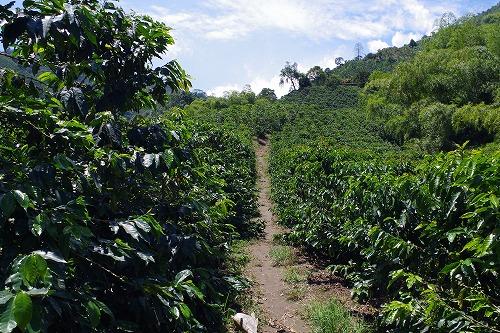 s-hacienda guayabal (21)