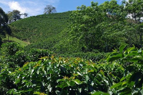 s-hacienda guayabal (23)