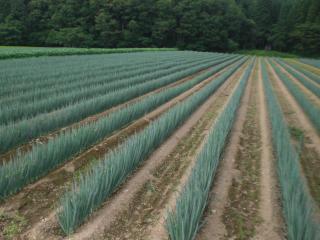 20150728 畑(3)