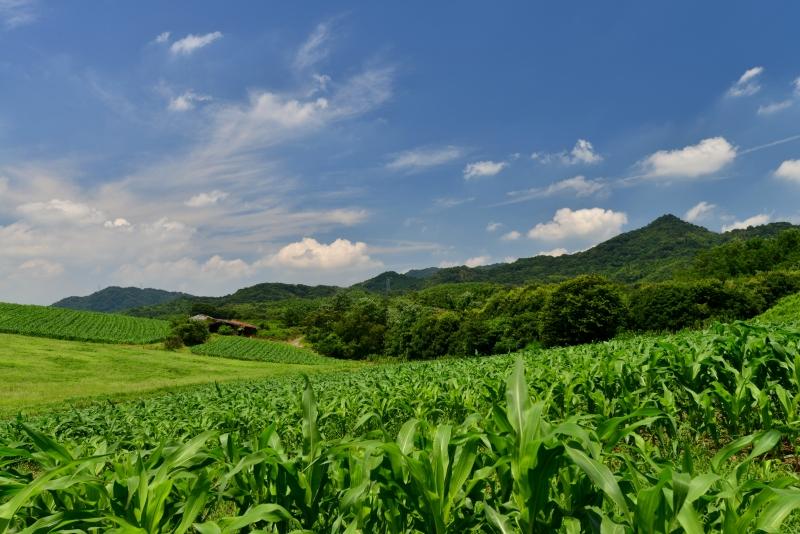 「夏の高原4」