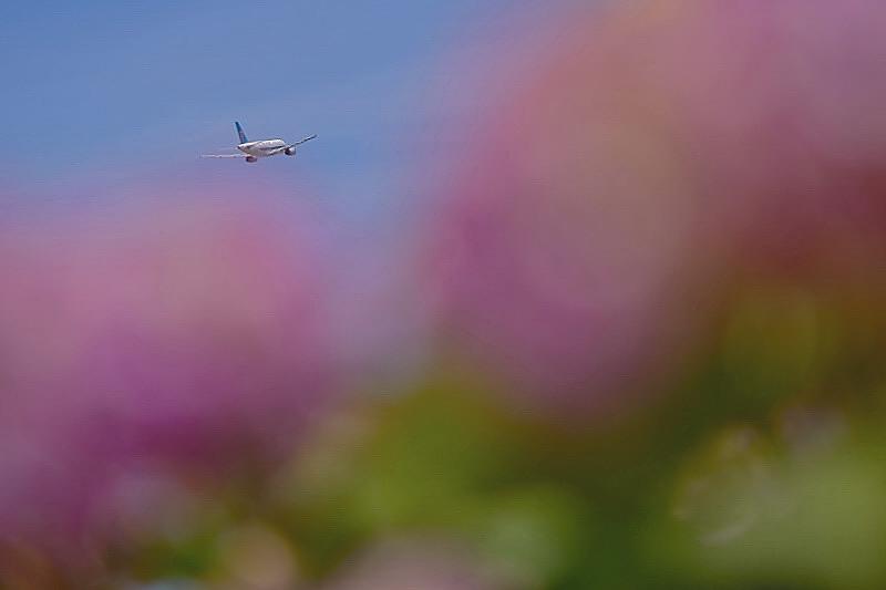 アジサイ飛行機