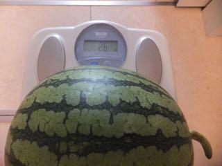 スイカの体重