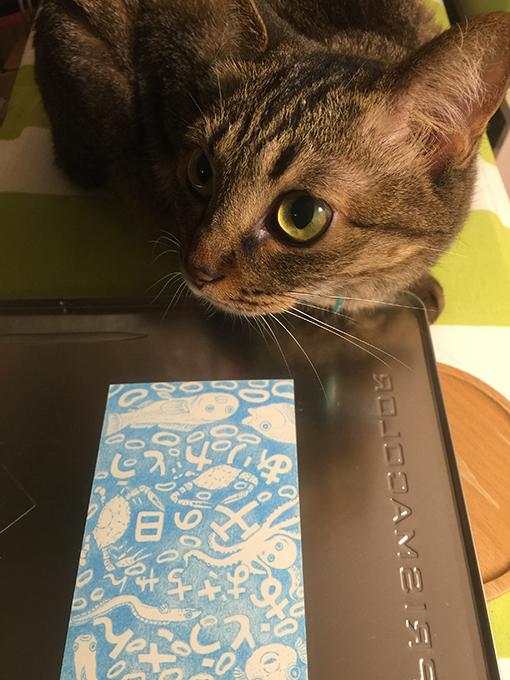 2015年06月19日のキジトラ猫クーちゃん