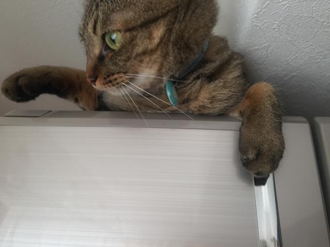 2015年06月22日のキジトラ猫クーちゃん