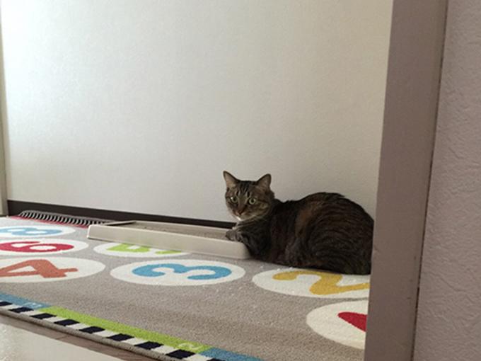 2015年06月15日のキジトラ猫クーちゃん