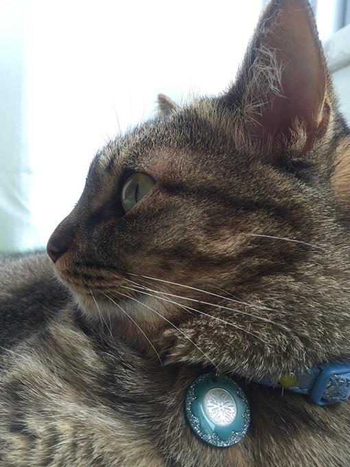 2015年06月27日のキジトラ猫クーちゃん