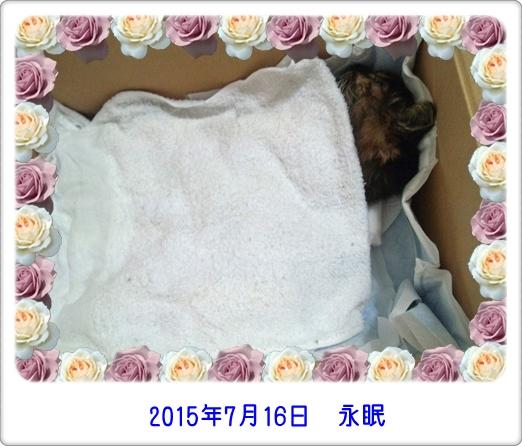 2015716 永眠