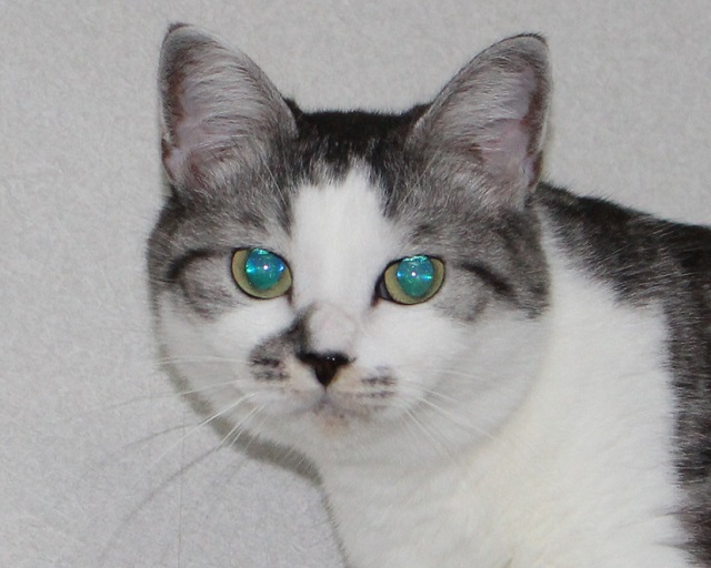 2ルナの瞳