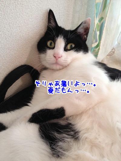 36HYF_Joi9TxXom1435852924_1435853010.jpg