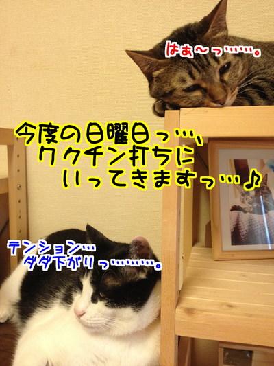 3yiewmq4B1lU0ou1436535876_1436536246.jpg