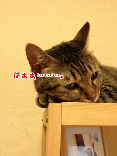 _rdni9TME3M_5Zi1436535000_1436535225.jpg