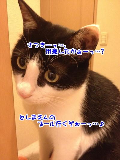 yuU4QXjrgPJpLbo1438697647_1438697764.jpg
