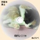 cat_dvd.jpg