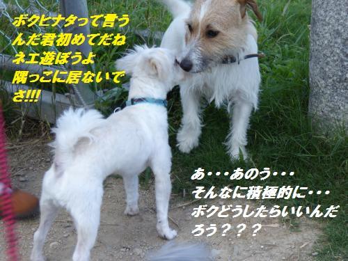P1000016_convert_20150717130530.jpg