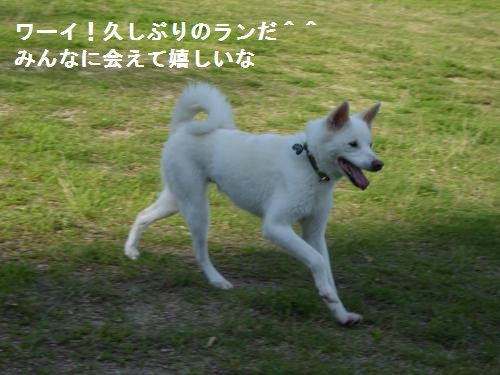 P1000032_convert_20150720083357.jpg