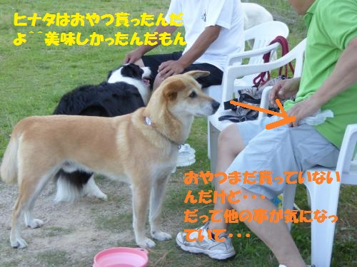 P1000140_convert_20150802083817.jpg