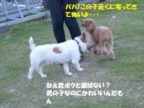 P1000147_convert_20150802084108.jpg