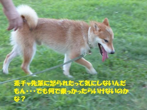 P1000149_convert_20150802084137.jpg