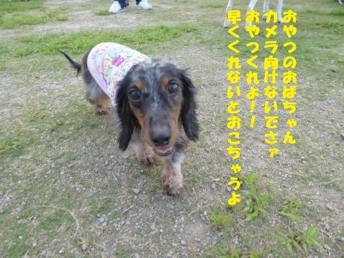 P1000159_convert_20150803092634.jpg