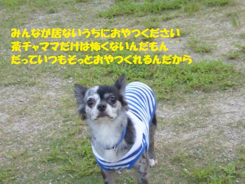 P1000161_convert_20150803092707.jpg