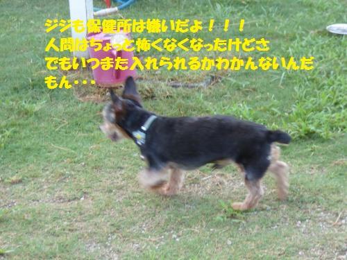 P1000162_convert_20150803092740.jpg