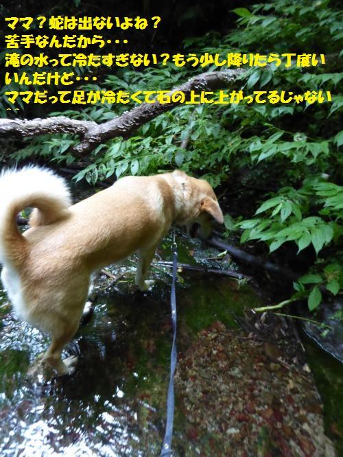 P1000227_convert_20150807090948.jpg