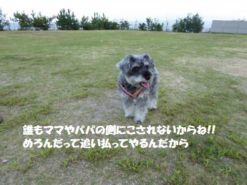 P1000243_convert_20150809083107.jpg