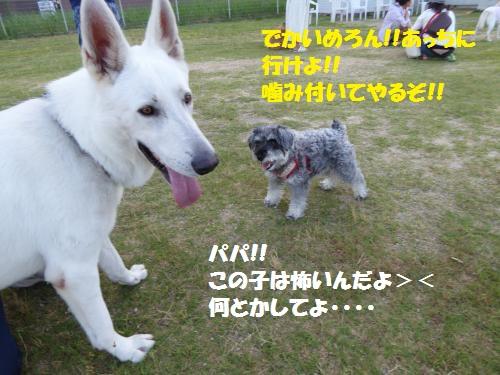 P1000244_convert_20150809083145.jpg