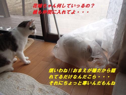 P6020153_convert_20150604083720.jpg