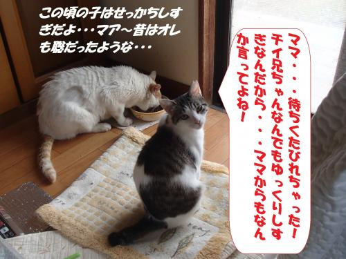 P6050159+(2)_convert_20150606101034.jpg