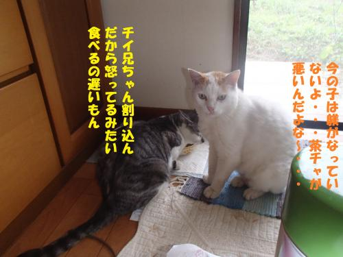 P6260362_convert_20150627131409.jpg