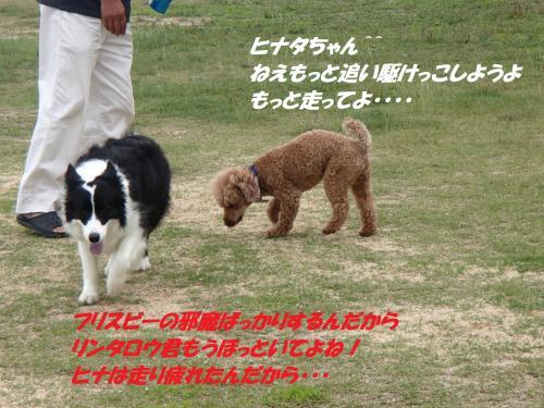 P6280382_convert_20150629094421.jpg