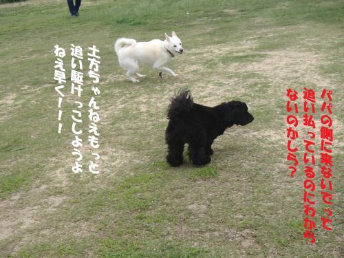 P6280383_convert_20150629094502.jpg