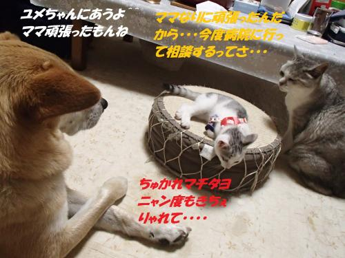 P6280388_convert_20150629095230.jpg