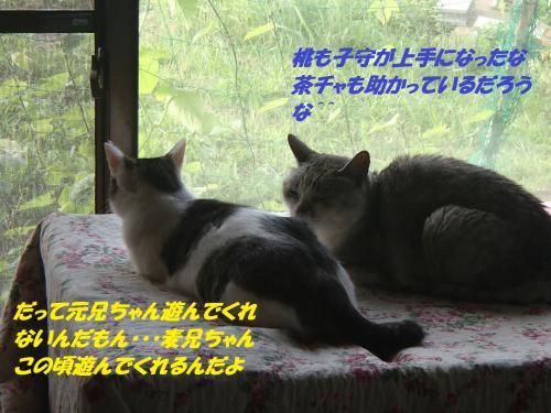 P7020416_convert_20150702144209.jpg