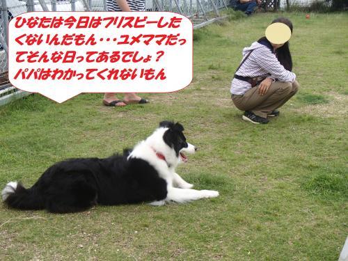 P7040450_convert_20150706112009.jpg