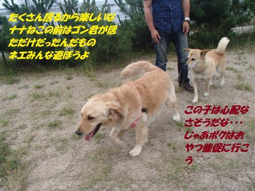 P7050467_convert_20150707151544.jpg