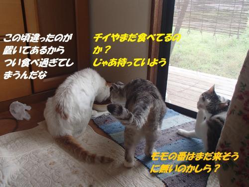 P7070480_convert_20150708101312.jpg