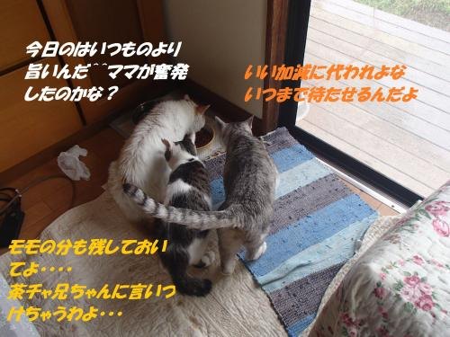 P7070481_convert_20150708101132.jpg